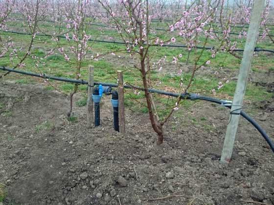 01.12 microrrigazione irrigazione veneta
