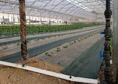 01.13 irrigazione