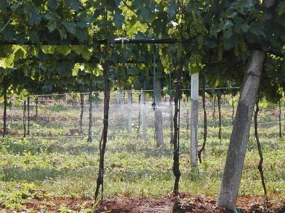 01.13 microrrigazione irrigazione veneta