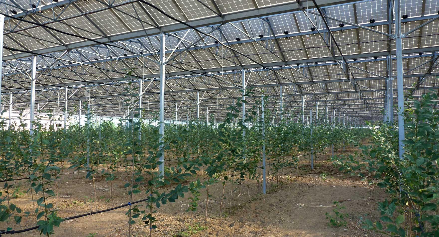 01.14 microrrigazione irrigazione veneta