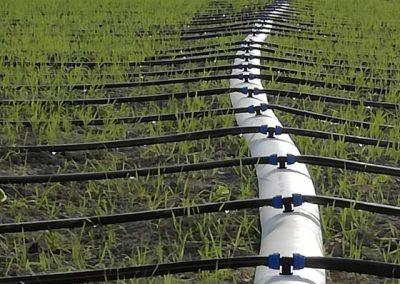 01.15 irrigazione
