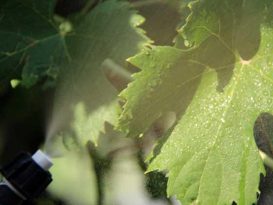 01.16 microrrigazione irrigazione veneta