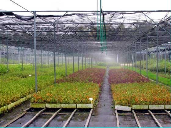 01.23 microrrigazione irrigazione veneta