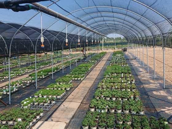 01.24 microrrigazione irrigazione veneta