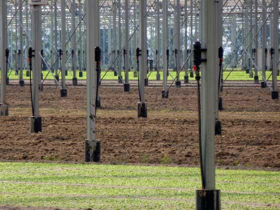01.25 microrrigazione irrigazione veneta