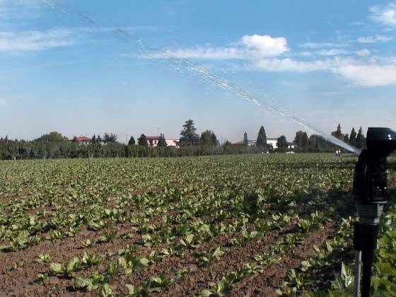 01.6 microrrigazione irrigazione veneta