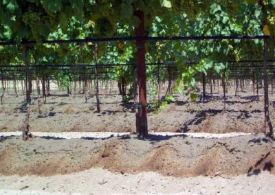 01.7 irrigazione