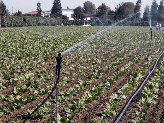 01.7 microrrigazione irrigazione veneta