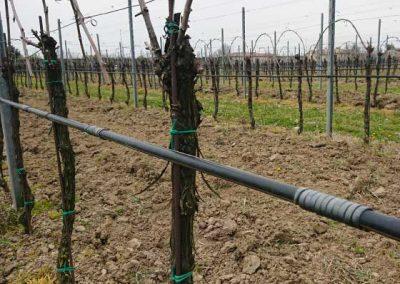 01.8 irrigazione