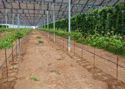 01.9 irrigazione