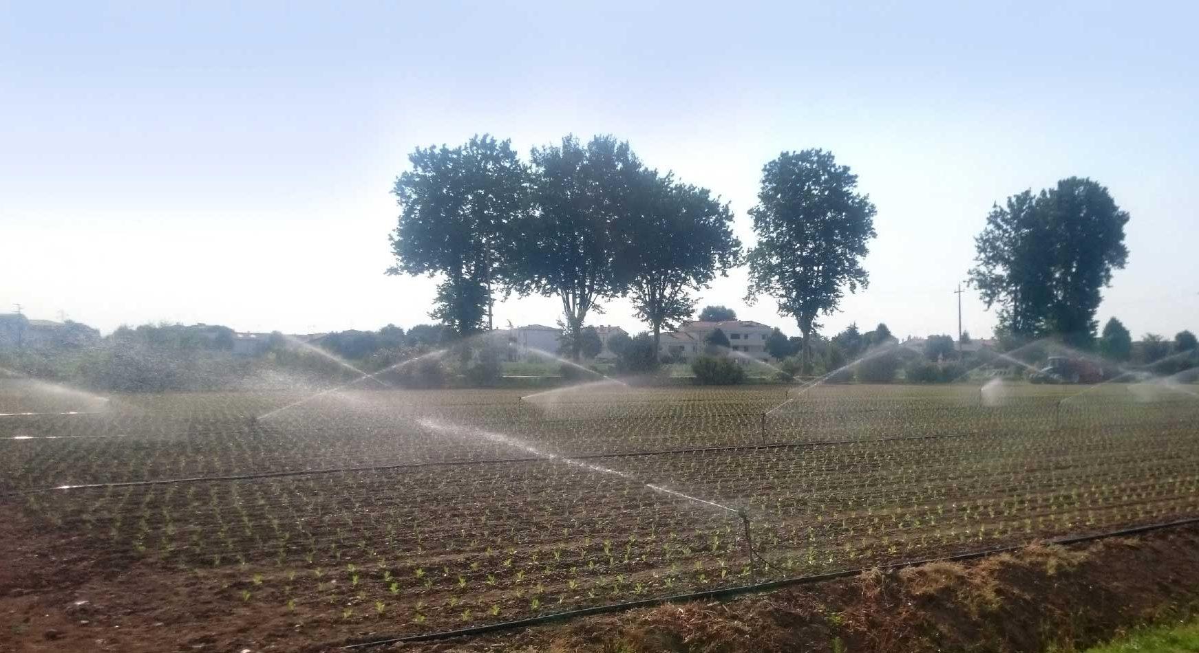 02.2 microrrigazione e1613404659906 irrigazione veneta